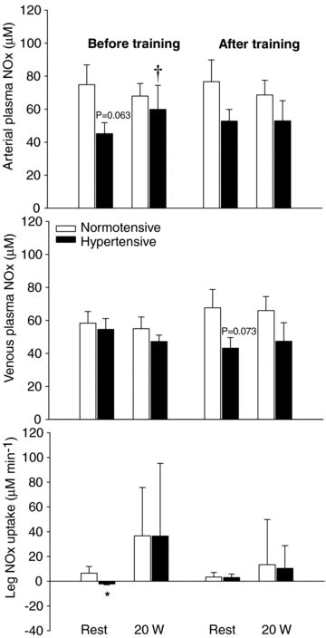 Role of nitric oxide and prostanoids in the regulation of