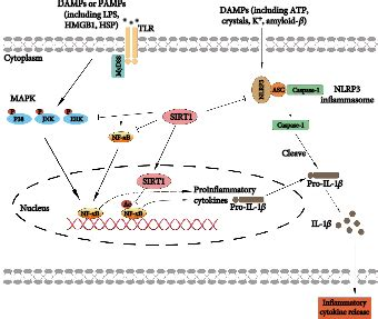 The Beneficial Roles of SIRT1 in Neuroinflammation-Related