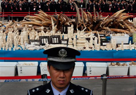 China Pledges To Do More—But Is It Enough To Stop Elephant