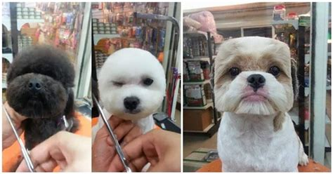 Taiwan Sets The Trend: Stylish Haircuts for Your Dog