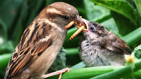 Birds and bugs: Birds eat up to 550 million tons of